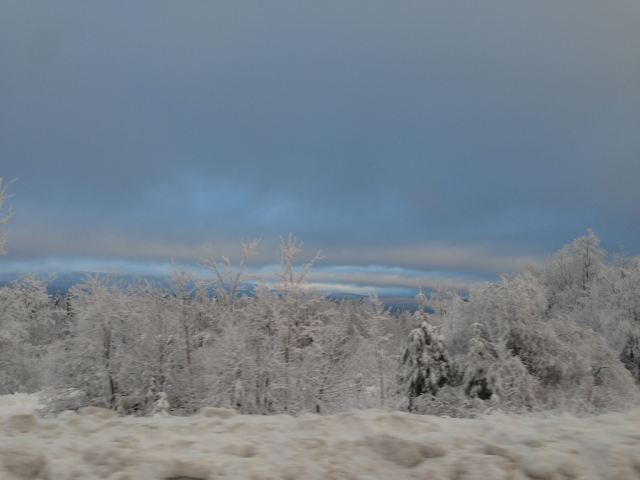 snowcoveredtrees-1024.png